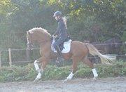 Horse for sale - MESSI E