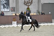 Horse for sale - BANJA LUCA