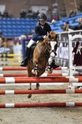 Horse for sale - WEST SIDE BLUE HIT
