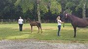 Hest til salg - MICKEY AF SKOVLYKKEGÅRD