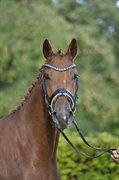 Horse for sale - FILUCA BYHØJ