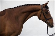 Horse for sale - WI TOXIC
