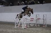 Hest til salg - LABAN UGLHOLM