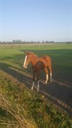 Horse for sale - Coco