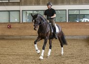 Horse for sale - SMILLA