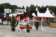 Horse for sale - Condor
