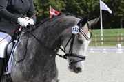 Horse for sale - LUPI'S DONCY