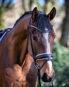 Horse for sale - Bello
