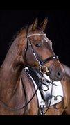 Horse for sale - KATTAVANGO