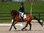 Horse for sale - STORBJERGS CASSIOPEIA