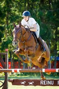 Horse for sale - Charming