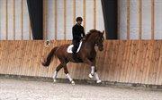 Horse for sale - VESTERDAMS KRIOS