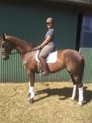 Hest til salg - CARINA