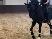 Horse for sale - Denise