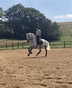 Horse for sale - Marondales Key To Love