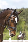 Horse for sale - ØSTERSØENS ROMANCE