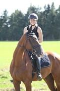 Hest til salg - FLET