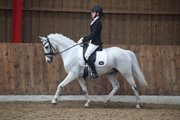 Horse for sale - MIKADO