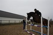 Hest til salg - VEMMETOFTE COSIMA