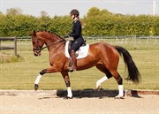 Horse for sale - RÅDBJERG'S PARI DARLING
