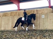 Horse for sale - NUKA LINDEBJERG