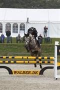 Hest til salg - KATRINEBJERGS EVITA