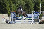 Horse for sale - SYVHØJEGÅRDS ELINOR