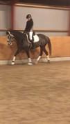Hest til salg - DINA-LAU