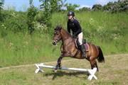 Horse for sale - HORSEMOSENS MANGO