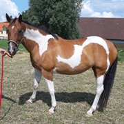 Horse for sale - HESSELBALLES CHANEL