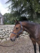 Horse for sale - NUMBER ONE Z