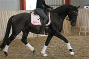 Horse for sale - HEDELUNDS SO FINE