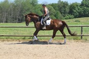 Horse for sale - FINESS