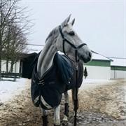 Horse for sale - VANILLA BLANCO