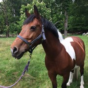 Horse for sale - SANDIE
