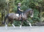 Horse for sale - DON DIAMANTE