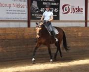 Horse for sale - BERNICE