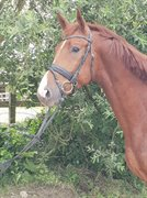 Horse for sale - DAM'S FIRST CLASS