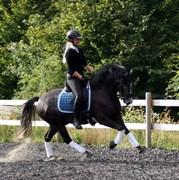 Horse for sale - KJELDALSGAARDS BOOGIE