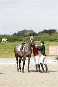 Horse for sale - CORNELLA JM