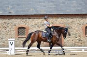 Horse for sale - TOP DRESSUR HEST KØBES