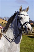 Horse for sale - DY SALADIN OX