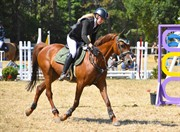 Horse for sale - HEDEMAND'S CANCAN
