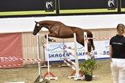 Horse for sale - GODDESS