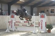 Horse for sale - TM BELLADONNA