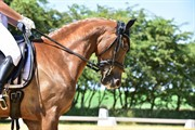 Horse for sale - TWISTER