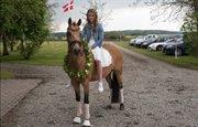 Horse for sale - MANDELBLÜTE K
