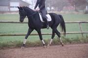 Hest til salg - SOUTH-WEST BONO