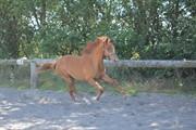 Horse for sale - LA GAZELLE H