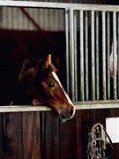 Horse for sale - Dakaro